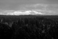 Snow-Covered Cascades from Tumwater Hill (Paul T. Marsh/PositivePaul) Tags: trees winter snow mountains clouds northwest olympia 2012 supertelephoto fujis3pro manualmetering maualfocus lightroom3 tumwaterhill wwwpaulmphotographycom paulmarshphotography nikon400mmf35ais