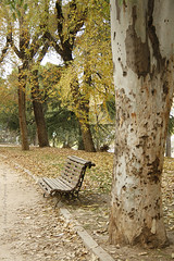 Atumn in the park I (S-a-s-a) Tags: park parque autumn tree yellow bench hojas banco amarillo rbol otoo cadas
