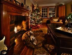 silent night, holy night (Rex Montalban Photography) Tags: christmas dog glass fireplace wine whippet ripley hdr photomatix nikond7000 rexmontalbanphotography