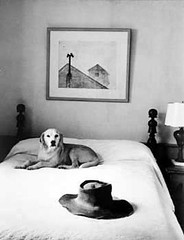 Eisenstaedt, Alfred (1898-1989) - 1965 Andrew Wyeth's Bed and Hat with Dog (RasMarley) Tags: dog hat photographer german american jewish wyeth 1960s 20thcentury 1965 andrewwyeth alfredeisenstaedt eisenstaedt