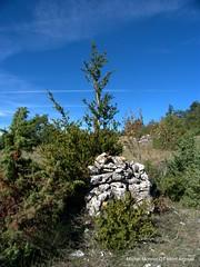 Sentier du Renard (MONT AIGOUAL) Tags: montaigoual randonnes causses cvennes caussenoir auteurmichelmonnot sentierdurenard