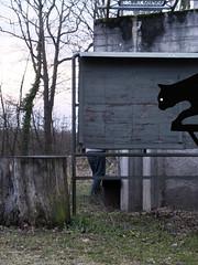 The Cat (julien `) Tags: france pee cat chat europe fuji hidden illusion fujifilm urine lorraine pipi 57 moselle x10 lignemaginot bambesch