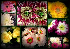A bit of colour to warm the day (Patricia Speck) Tags: flowers winter collage landscape petals spring colours tricia patricia speck january2013