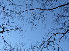 Central Park, New York (Francisco Arago) Tags: new york nyc newyorkcity blue sky usa newyork cold weather horizontal azul amrica day photographer centralpark manhattan patterns branches dia cu galhos frio fotgrafo ramos verycold novayork padres amricadonorte semfolhas tempofrio canong10 juliananardoniarago