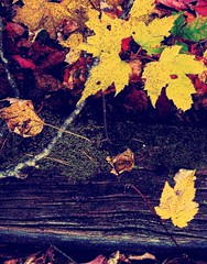 railroad tie autumn tableau (LauraSorrells) Tags: wood autumn painterly home nature leaves yellow bokeh twigs 2007 thecove underfoot