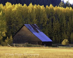 Golden Glow (RU4SUN2) Tags: fall washington fallcolor farm barns stevenspass