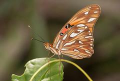 Mariposa en la Isla de Margarita