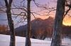 Grandfather Through the Trees (DKNC) Tags: trees winter snow sunrise blueridgeparkway highlandgames grandfathermountain macraefields sugarmountainphotography
