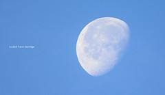 Setting morning Moon (Trevdog67) Tags: moon waning gibbous craters setting sunrise sky powderblue morning astronomy shadow orbit celestial nikon d7100 sigma 150600mm contemporary 14x teleconverter moncton newbrunswick nouveaubrunswick canada
