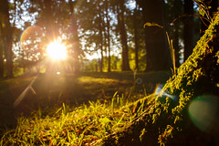 Moss on a tree (franznbauer) Tags: moss tree evening sun lens flare