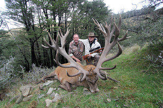 New Zealand Red Stag Hunting - Christchurch 29
