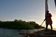 Dhow negotiating mangroves at Kilwa Kisiwani on return voyage (1) (Prof. Mortel) Tags: tanzania dhow mangroves