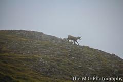 IMG_3468 (The Mitz Photography) Tags: gams grünersee hochschwab mariazell maryclan murmerl mädels nebel pilgern sommer steinbock wandern
