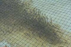 Columbia River Gorge - Bonneville Dam - Fish Hatchery (jrozwado) Tags: northamerica usa oregon columbiarivergorge bonneville dam hatchery fish trout nationalscenicarea nationalhistoricdistrict