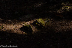 Light of life (MacaPDX) Tags: mirrorlake trail lightoflife foliage woods plants light shadows forest nature moss rocks