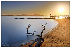 Seaweed (juliewilliams11) Tags: photoborder outdoor shoreline shore waterfront sand pebbles driftwood seaweed jetty sunrise rocks landscape newsouthwales australia canon 70d hdr longexposure serene peaceful sun