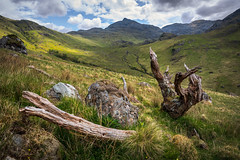 JHF0003923 (janhuesing.com) Tags: rot inverie scotland wildlife hiking highlands mallaig knoydart landscape nature outdoor