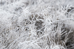 Frosted (Ian@NZFlickr) Tags: frost grass lawrence otago nz spring