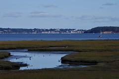 1331-24L (Lozarithm) Tags: arne rspb dorset landscape estuary coastline pooleharbour k1 55300 hdpda55300mmf458edwr justpentax
