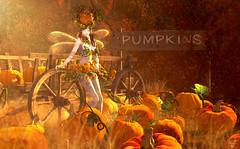 Pumpkin fairy (meriluu17) Tags: boudoir fall autumn pumpkin pumkins orange warm light sigh vagon fairy fae faeiry dragonfly outdoor magic fantasy people surreal
