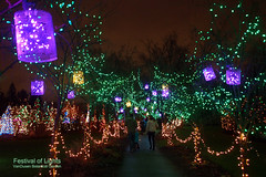 Festival of Lights at VanDusen Botanical Garden (どこでもいっしょ) Tags: christmas xmas canada green colors vancouver lights holidays colorful bc nightshot led bluehour xmaslights festivaloflights xmastree familyevent m43 vandusenbotanicalgarden mirrorless microfourthirds olympusm12mmf20 olympusomdem5