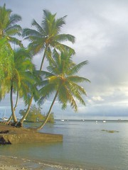 Hilo Bay (h willome) Tags: ocean palms hawaii hilo 2010