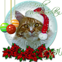 Oscar wünscht allen unseren Flickr Freunden schöne Weihnachten! - Oscar wishes all our flickr friends Merry Christmas! 2012