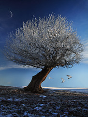 Winter Magic (Robstorm Photography) Tags: old uk winter light england white snow storm cold tree art beauty photoshop landscape amazing frost dove magic fineart hour lone wonderland magical twisted enchanted outstanding winterbeauty canon5dmark2 oswestryshropshire flickrstruereflection3 rememberthatmomentlevel1 robstormphotography besteverdigitalphotography vigilantphotographersunite vpu2