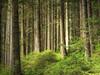 Black Forest (Habub3) Tags: wood travel holiday plant black tree nature forest canon germany deutschland search flora europa europe urlaub natur powershot freiburg holz wald schwarzwald baum schwarz hdr vacanze 2012 reise g12 serach habub3 mygearandme