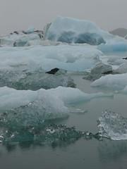 Iceland, Jkulsrln - Some icebergs... - by Stef (Hlne_D) Tags: iceland lagoon glacier iceberg sland islande jkulsrln glacierlagoon vatnajkull lagon austurland easticeland lacglaciaire beautifuliceland icelandlandscape easterniceland glacierlagoonjkulsrln hlned estislande icelandicwaterinvariousforms