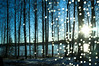 On the road to Fagersta (johanna) Tags: trees sverige västmanland starsinthedaytime geo:lat=6011940377583062 geo:lon=15793375190551728