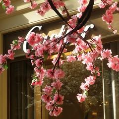 Flores,reflejos y lujo (nuska2008) Tags: travel pink reflections gum flickr moscow cartier tiendas reflejos rusia moskva moscú floresrosas olympusu1060s1060 nuska2008 nanebotas ´centrocomercialgum ärbolflorido