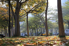 Kaohsiung museum of fine arts  048 (Abel_Lai@tw) Tags: trees winter leaves museum canon taiwan kaohsiung   6d mobile01