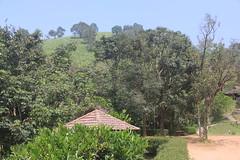 048 (balagopalmohan) Tags: rain country wyanad