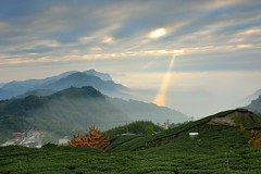 The ray in tea field @ (Vincent_Ting) Tags: sunset sky clouds taiwan  formosa  jiayi   seaofclouds alisan    teafield