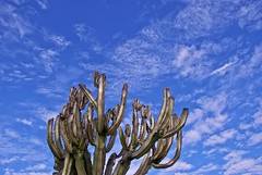 Cactus Clouds (Russ Allison Loar) Tags: california winter summer cactus sky hot west weather clouds cacti skyscape solitude seasons desert dry drought western isolation wilderness thorns southerncalifornia claremont wintersky desolation meteorology solace losangelescounty watershortage summersky nephrology sunnysky