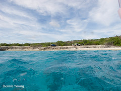 Tolo Beach (dlyoung) Tags: fall wildlife scuba bonaire tolo flowersplants shoredive divetype