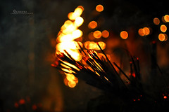 Joss Sticks (Kanishke Ganewatte Photography) Tags: temple sticks bokeh sri lanka joss kalaniya