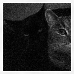 #good #night #cats (ChestnyStarik) Tags: square squareformat inkwell iphoneography instagramapp uploaded:by=instagram