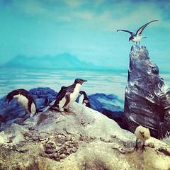 Fauna de la Antártida / Antarctic Fauna