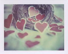Love Nest #2 (mckenziemedia) Tags: film up closeup vintage hearts polaroid day close heart nest valentine filter type valentines expired 108 195