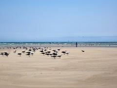 (photohp) Tags: cape cod oiseaux plage golands