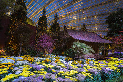 Flower Dome, Singapore (MartinHroch) Tags: singapore flowerdome flowers chinesehut chinese gardensbythebay chrysanthemums structure flora urbanoutdoor recreation nationalicon city night scenic inspiration marinabay relax