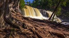 Roots (Paul Domsten) Tags: gooseberrystatepark minnesota pentax waterfall tree treeroots minnesotastateparks