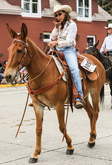 I Get a Blown Kiss From A Cowgirl (wyojones) Tags: wyoming cody codystampede codystampederodeoparade codystampedeparade 4thofjuly cowgirl cowgirlhat horsewoman hat boots saddle blowakiss kiss horseback jeans bluejeans mule