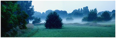 Meadows at the river (na_photographs) Tags: aue fluss river holm flussaue frhnebel bodennebel nebel mist fog wiese trees bume morgen morning