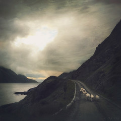 Heading Home (M a r i k o) Tags: iphone iphone6s iphoneography iphonephotography mobile mobilephotography mariko square sheep road mountains mountain clouds sunset cloudy moody atmospheric sea water ocean nesland lofoten norway norge nordland hipstamatic phototoaster snapseed alayer picfx