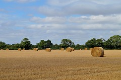 Straw Bales (DaveJC90) Tags: suffolk view landscape village playford straw bale bales field church building old classic stone rock summer warm hot walk walking afternoon path footpath river fynn green grass stmarys colour colours crop croped nikon d5100 digital slr camera zoom wide angle lens 1020mm 1855mm detail sharp sharpness