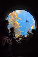 DSC_0103 (rlnv) Tags: california centralcoast monterey montereybayaquarium aquarium nikond3300 1855mmf3556gvrii toms walter animal rosina