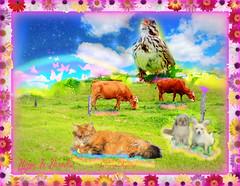 Tous heureux au paradis pour toujours (Dhyana died august 4th 2016) Tags: dhyana pp ouioui bird rainbow paradis paradise frame collage bluesky digitalart passaway died euthanasie 4aot2016 morte partie fini termin pourtoujours over foreverandever